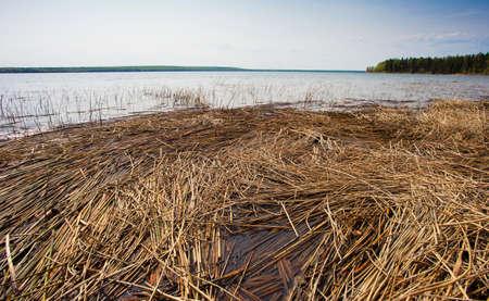 서스 캐처 원에서 Dore 호수에 쌓인 갈 대 스톡 콘텐츠
