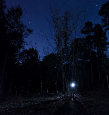 Single flashlight in the forest with stars in the sky above