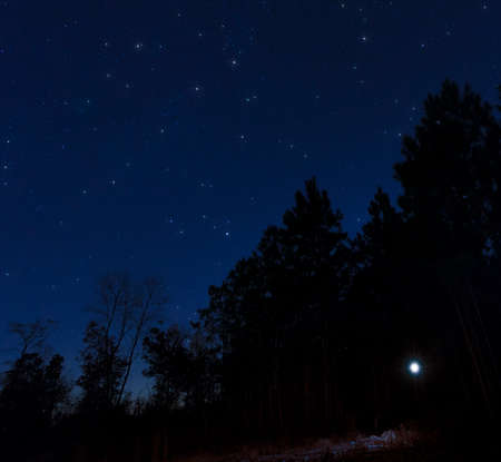 Single flashlight at night in a treeline with stars above