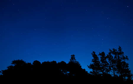 Treeline silhouetted by bright stars in a North Carolina night sky