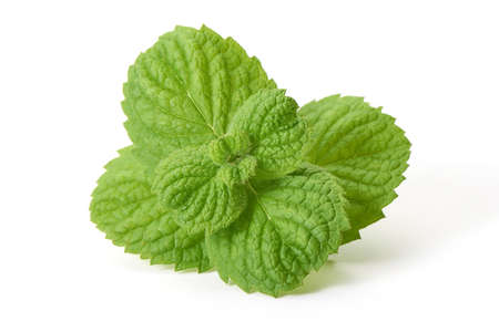 Fresh mint leaves, close-up, isolated on white background.