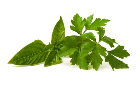 Fresh green parsley leaf with basil leaf, isolated on white background Stock fotó