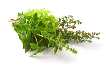 Fresh spices and herbs bouquet, isolated on white background. Dill, lettuce, thyme, sage. Isolated on white background