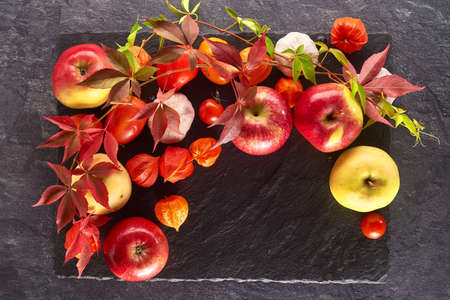 Autumn colorful Still life of apples, physalis, and leaves of grapes on a slate shale plate