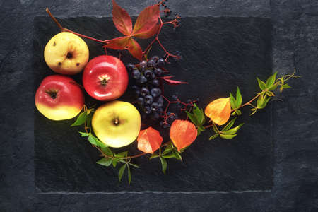 Still life of apples, physalis, and leaves of grapes and grapes on a slate shale plate