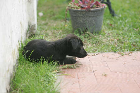 bred: No Bred Black Lovely Puppy resting in the garden