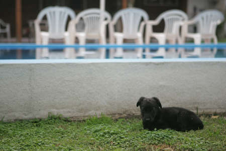 bred: No bred black puppy, resting in the grass  Pool 1  Stock Photo