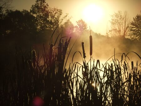 cattails: Early morning steam on pond and silhouetted cattails and trees at surnrise Stock Photo