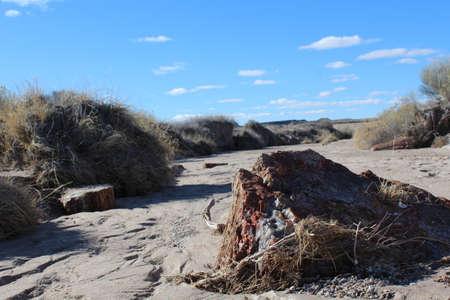 Petrified Wood in Arizona desert