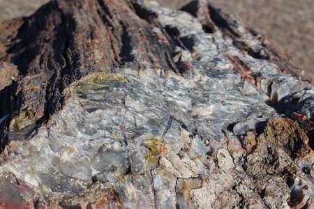 Petrified Wood Log