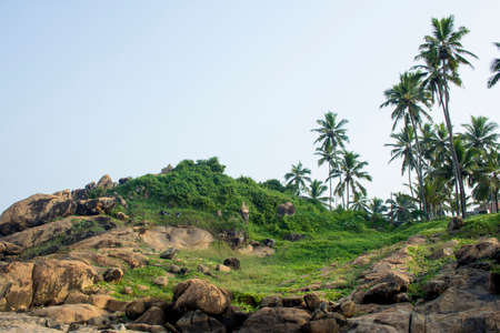 hillock: Hillock view with green bushes and palmtrees at Kovalam Beach in Kerala, India