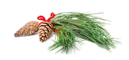 Christmas Pine Branches with Two Cones on white Background