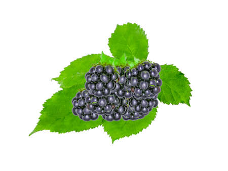Blackberry With Green  Leaves on white Background