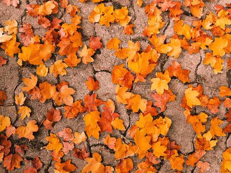 Or feuilles d & # 39 ; automne Banque d'images - 88333354