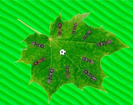 Ants Play Soccer on green Leaf  -  JPEG Illustration