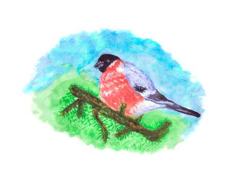 Oiseaux bouvreuil sur la branche de printemps d & # 39 ; Banque d'images - 88565156