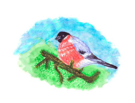 Oiseau Bouvreuil sur une branche d'arbre de pin - Illustration aquarelle Banque d'images - 89991855