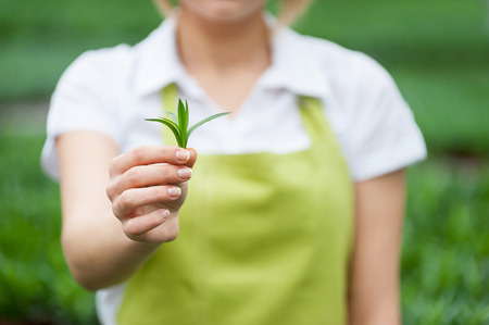 cropped out: Think green! Cropped image of woman in apron stretching out green leafs in hand  Stock Photo