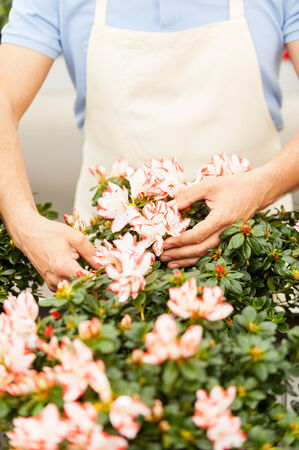 handcarves: Cropped image of man in apron taking care of flowers while standing in greenhouse Stock Photo