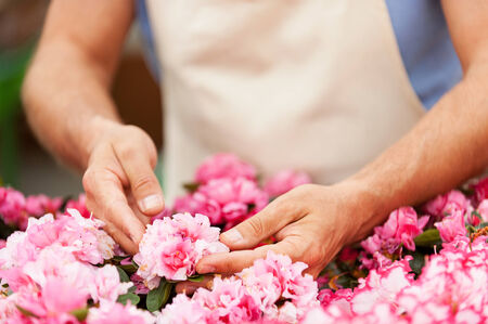 cropped image: Cropped image of man in apron taking care of flowers while standing in greenhouse Stock Photo