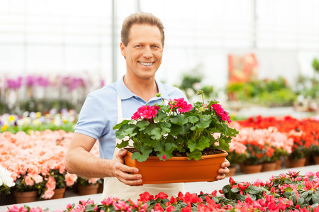 Handsome mature man holding a potted plant and smiling at camera while standing in green house Banco de Imagens