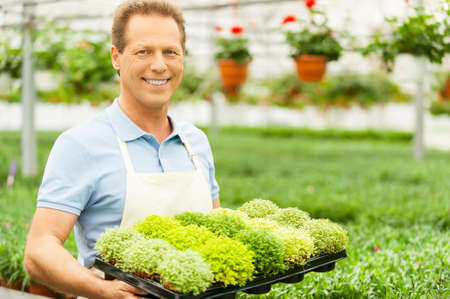 Handsome mature man holding a potted plant and smiling at camera while standing in green house photo