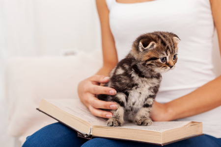stroked: Little bookworm. Cute little kitten sitting on the open book while being stroked by woman Stock Photo
