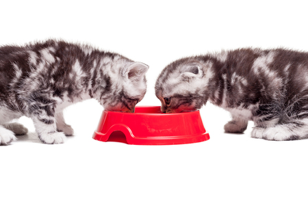 reloading: Reloading their energy. Two little kittens eating cat food from the one bowl while sitting in front of each other Stock Photo