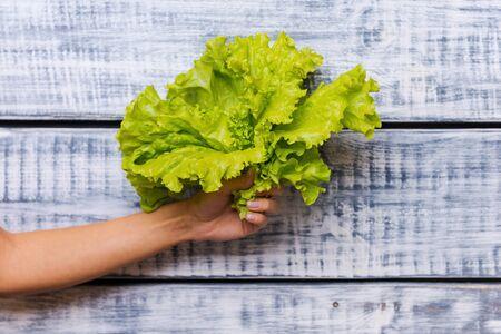 freshest: The freshest lettuce. Close-up of female hand holding fresh lettuce in front of wooden background