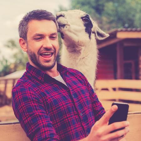 only man: Me and my new friend. Joyful young man making selfie on his smart phone while llama touching his head