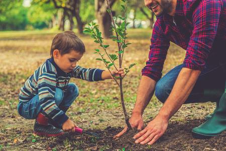 albero della vita: Lascia che ti aiuti! Little boy aiutare suo padre a piantare l'albero mentre si lavora insieme in giardino