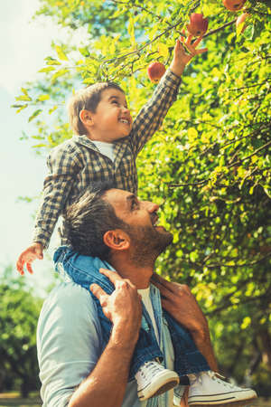 people in action: Reaching the tastiest fruit. Joyful little boy stretching out hand to apple while his father carrying him on shoulders