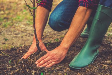 jardinero: Plantar un árbol. Close-up en el hombre joven de plantar el árbol, mientras trabajaba en el jardín Foto de archivo