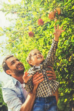 manzana: Quiero que la manzana! Niño pequeño alegre estirando la mano para manzana, mientras que su padre le recogiendo Foto de archivo