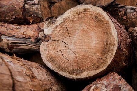 lumber industry: Good log. Close-up of huge log layingamong others
