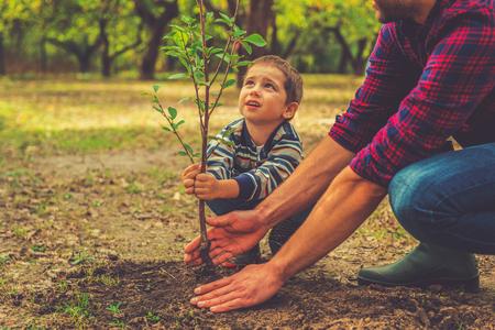 Cuándo va a crecer? Niño pequeño curioso ayudando a su padre a plantar el árbol mientras trabajan juntos en el jardín Foto de archivo - 45234716