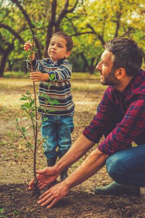 medioambiente: Va a ser un gran �rbol! Ni�o peque�o ayudando a su padre a plantar el �rbol mientras trabajan juntos en el jard�n