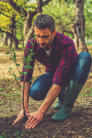 green man: Planting new life. Confident young man planting a tree while working in the garden
