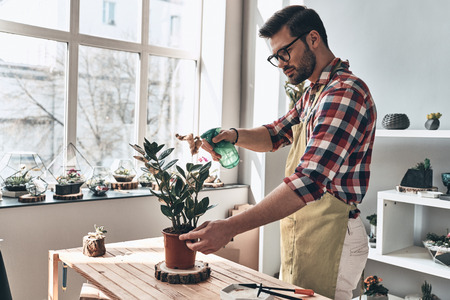 Keeping plants refreshed. Handsome young man in apron watering potted plant while standing in small garden center         Stock Photo