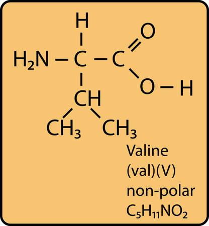 Valine skeletal Diagram Vector Illustration
