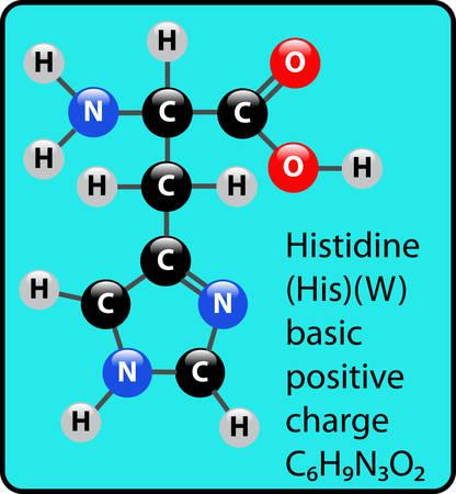 Histidine ball and stick diagram