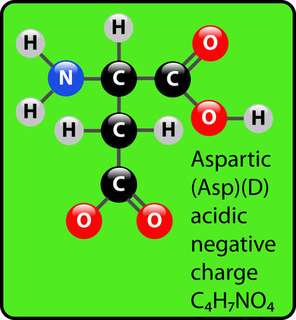 Aspartic ball and stick diagram