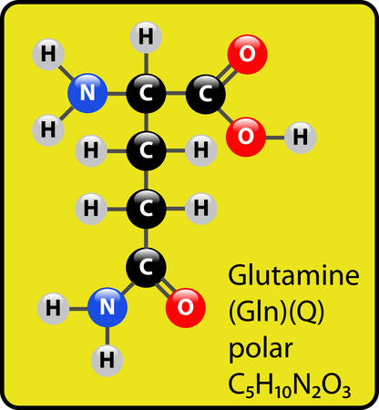 Glutamine ball and stick diagram