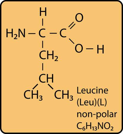 Leucine skeletal diagram