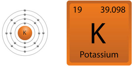 Potassium Shell Vektorové ilustrace