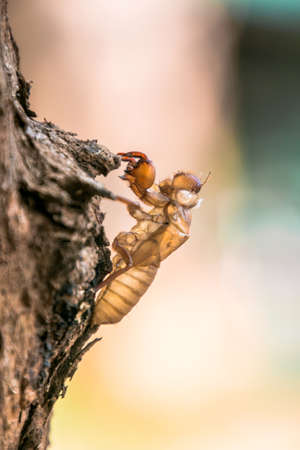 All cicadas must left theirs shell for growth.