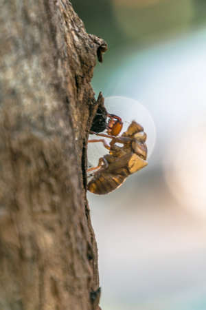 abandon: All cicadas must left theirs shell for growth.