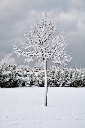 Tree was covered by snow at the park  photo