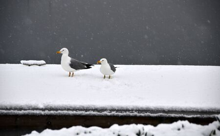 Two seagulls were standing on dock and searching for food Stock Photo - 12603469