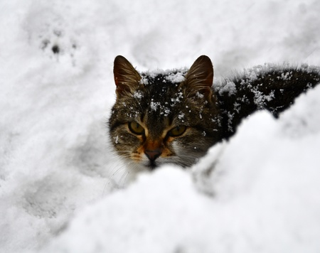 Cute cat was looking around while it was snowing